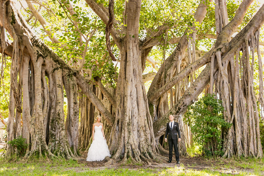 Epic Banyan Tree Wedding Portrait