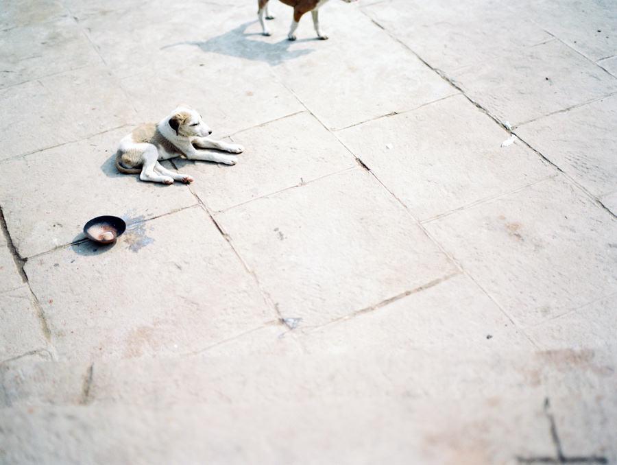 Stray dog, India