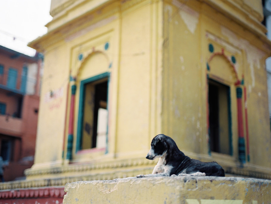 A stray dog in India